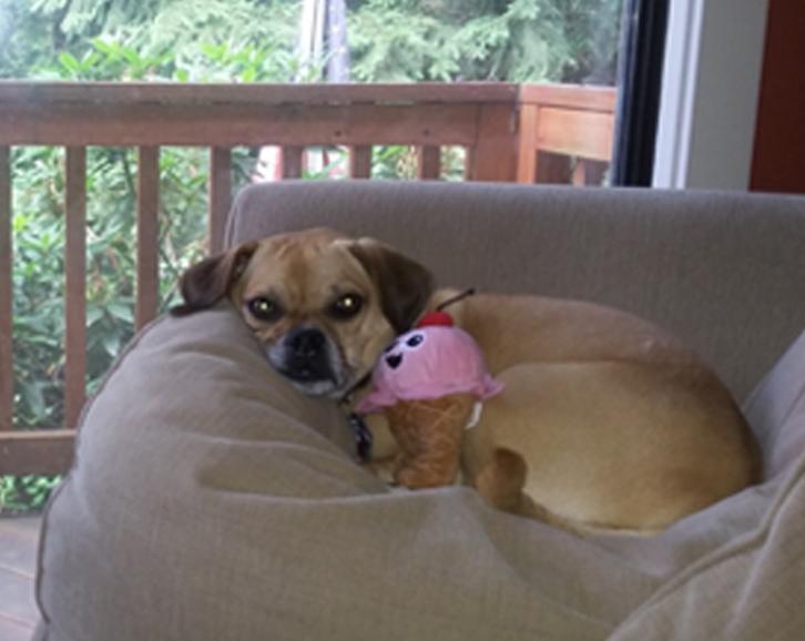 Daisy, Chief Puppy Officer (CPO)